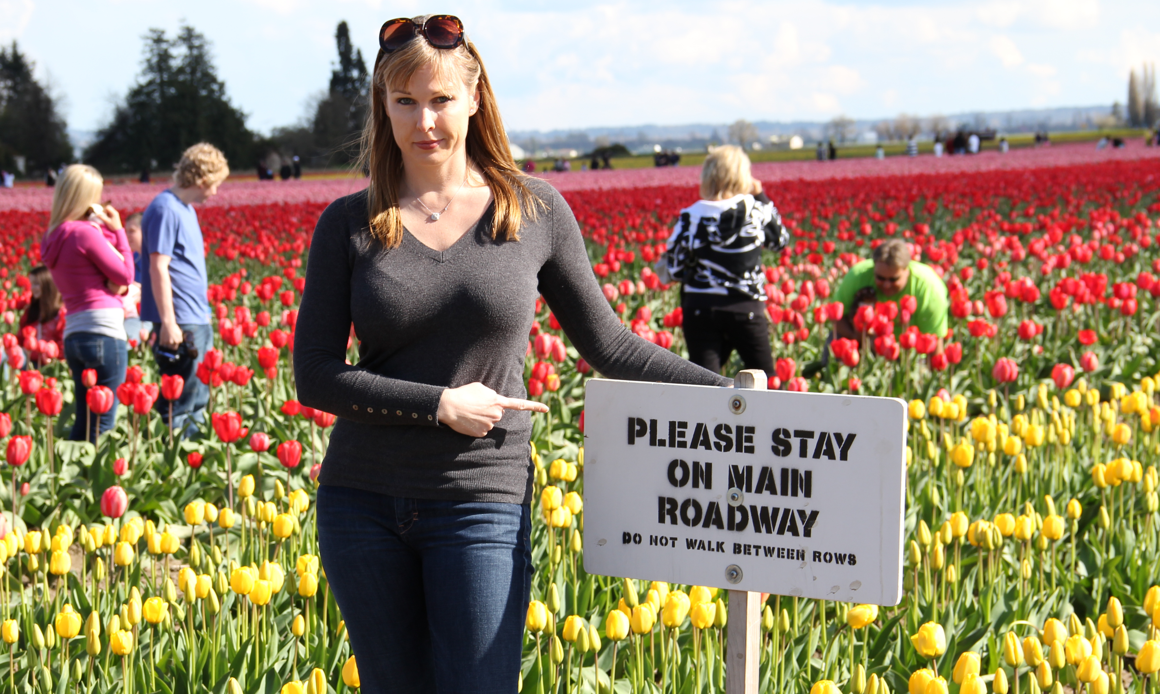 Tulip Festival Bloom Map Tulips are Blooming in Skagit Valley | OC 2 Seattle Tulip Festival Bloom Map